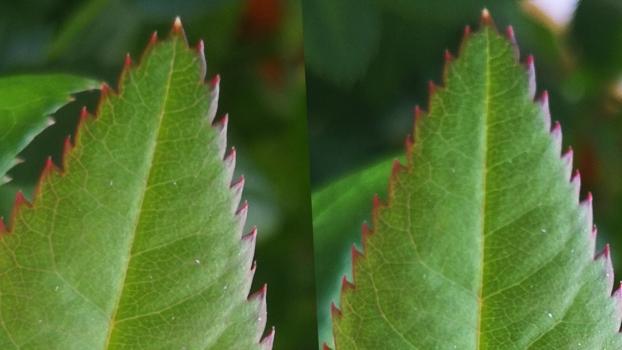Слева Zoom2 X, справа без Zoom